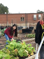 Research Garden at RHMS Better Than Ever